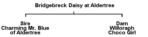 Daisy's Pedigree