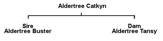 Kate's Pedigree
