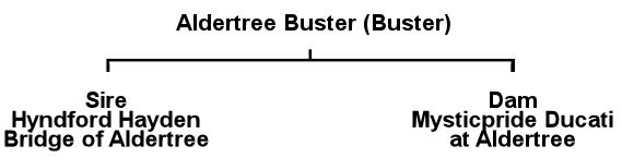 Buster's Pedigree